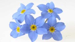 fiori nonni